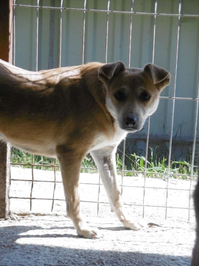 MAIKA - chienne croisée de taille moyenne, née 2015 - (Pascani) REMEMBER ME LAND - Page 2 Maika_15