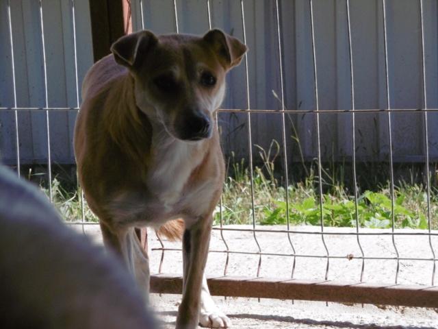 MAIKA - chienne croisée de taille moyenne, née 2015 - (Pascani) REMEMBER ME LAND - Page 2 Maika_17