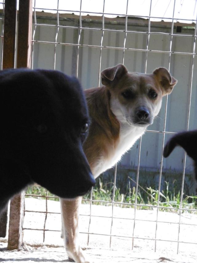 MAIKA - chienne croisée de taille moyenne, née 2015 - (Pascani) REMEMBER ME LAND - Page 2 Maika_18