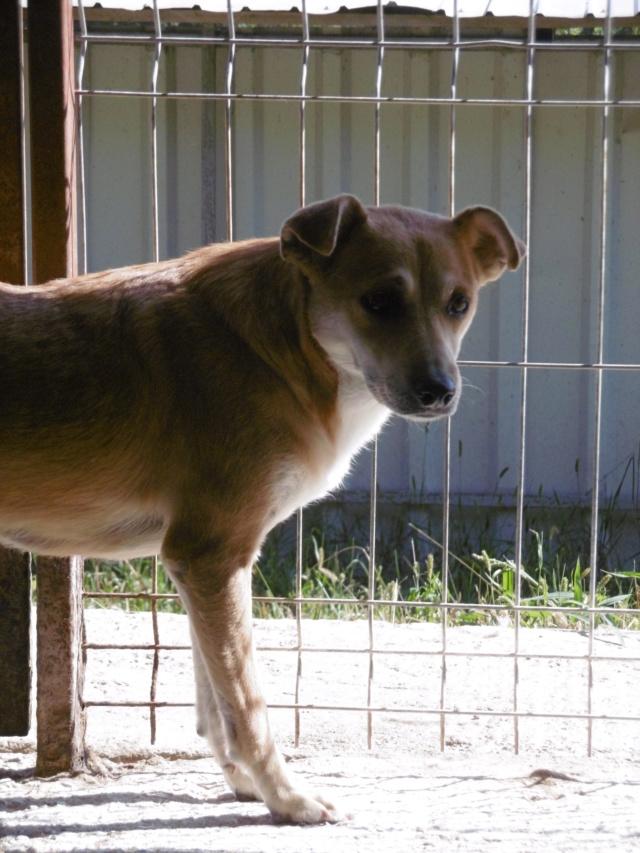 MAIKA - chienne croisée de taille moyenne, née 2015 - (Pascani) REMEMBER ME LAND - Page 2 Maika_19