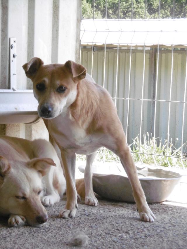 MAIKA - chienne croisée de taille moyenne, née 2015 - (Pascani) REMEMBER ME LAND - Page 2 Maika_21