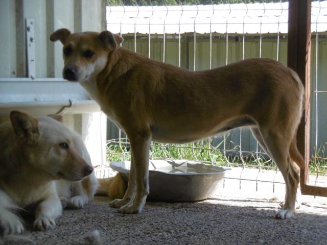 MAIKA - chienne croisée de taille moyenne, née 2015 - (Pascani) REMEMBER ME LAND - Page 2 Maika_22