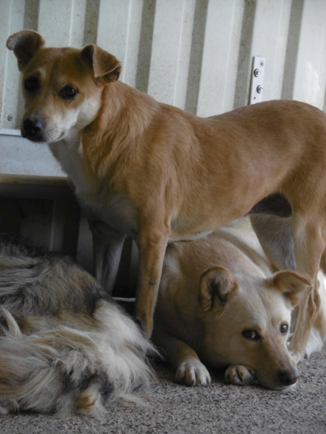 MAIKA - chienne croisée de taille moyenne, née 2015 - (Pascani) REMEMBER ME LAND - Page 2 Maika_23