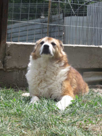 MALIBU, mâle, né en 2009, de taille moyenne - !! PLUS De 2 ANS DE CAPTIVITE !! (Pascani) - REMEMBER ME LAND - En FALD chez Cécile (54) - décédé - Page 4 Malibu19
