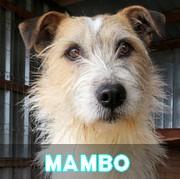 Les adultes de taille moyenne en Roumanie en un clin d'oeil Mambo14
