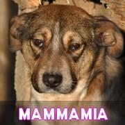 Les adultes de taille moyenne en Roumanie en un clin d'oeil Mammam25