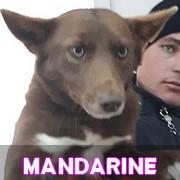 Les adultes de taille moyenne en Roumanie en un clin d'oeil Mandar10