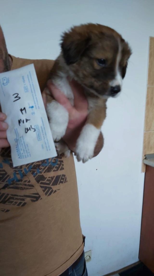TWINKY (ex MARCH) - chiot mâle, de taille moyenne à l'âge adulte, né environ en février 2020 - Adoptée par Aurélien (83)  March10