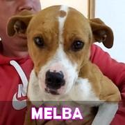Les adultes de taille moyenne en Roumanie en un clin d'oeil Melba11