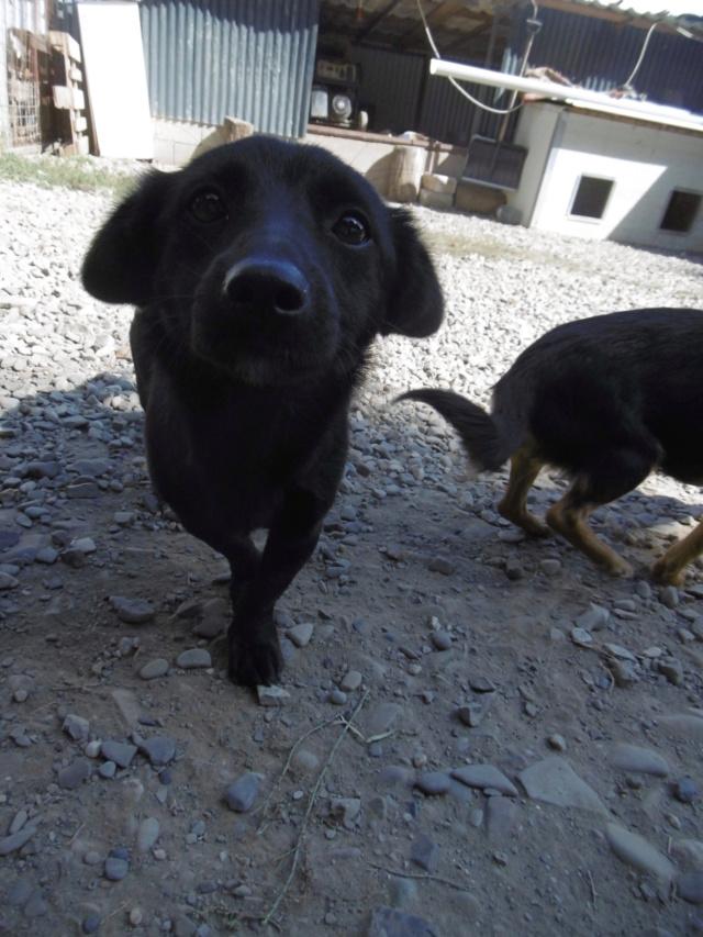 MICRA - Chiot femelle - petite taille à l'âge adulte - Née environ mi janvier 2019 - REMEMBER ME LAND - réservée adoption par Jessyca et Etienne (13)  Micra_10