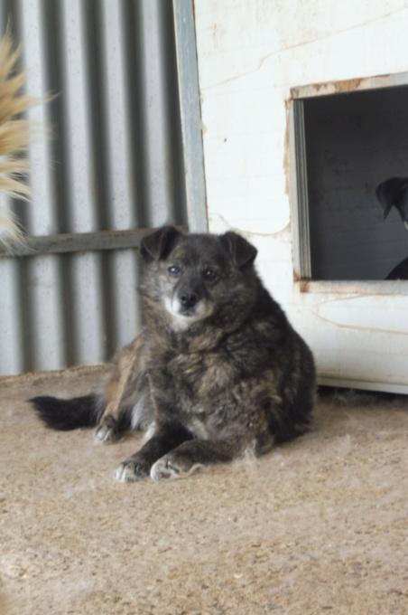MIGNONNE - femelle, croisée, née environ août 2012, de petite taille - REMEMBER ME LAND - En FA chez Armelle (94) - Page 2 Mignon11