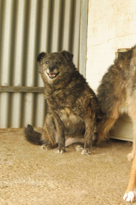 MIGNONNE - femelle, croisée, née environ août 2012, de petite taille - REMEMBER ME LAND - En FA chez Armelle (94) - Page 2 Mignon13