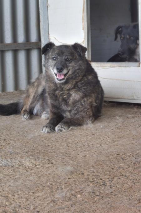 MIGNONNE - femelle, croisée, née environ août 2012, de petite taille - REMEMBER ME LAND - En FA chez Armelle (94) - Page 2 Mignon14