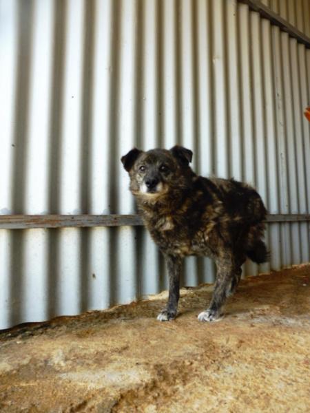 MIGNONNE - femelle, croisée, née environ août 2012, de petite taille - REMEMBER ME LAND - En FA chez Armelle (94) - Page 2 Mignon19
