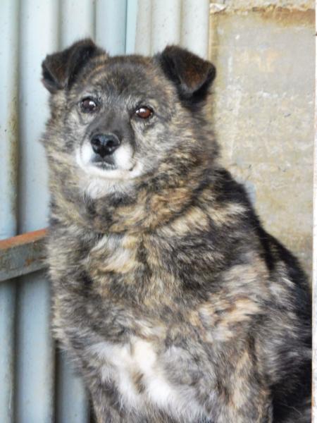 MIGNONNE - femelle, croisée, née environ août 2012, de petite taille - REMEMBER ME LAND - En FA chez Armelle (94) - Page 2 Mignon22