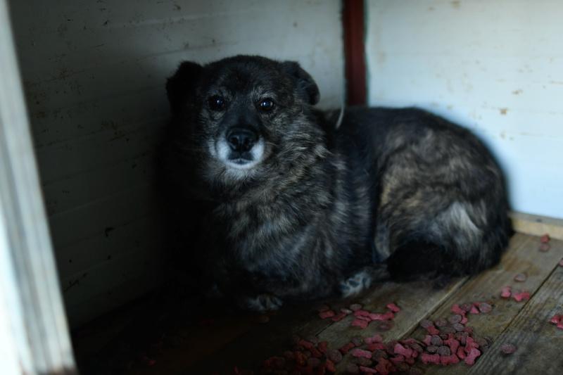 MIGNONNE - femelle, croisée, née environ août 2012, de petite taille - REMEMBER ME LAND - En FA chez Armelle (94) - Page 3 Mignon26