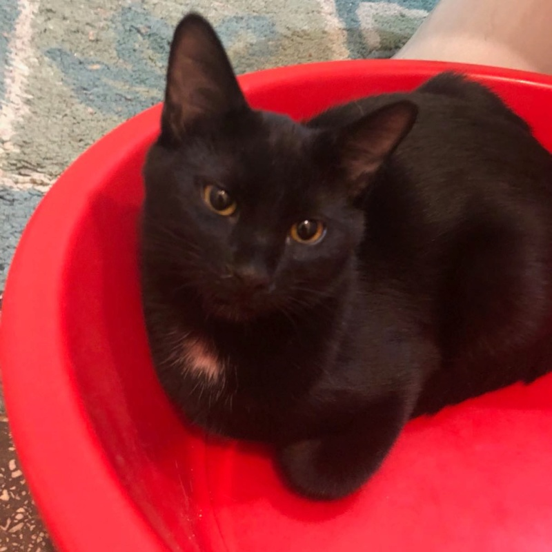 MIKE - très joli chat mâle, très joueur, né en mars 2018 (BUCAREST) - CHEZ CARMINA- RESERVE EN ALLEMAGNE Mike410
