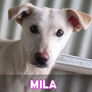 Les chiots en roumanie en un clin d'oeil  Mila13