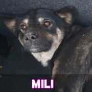 Les adultes de taille moyenne en Roumanie en un clin d'oeil Mili11