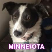 Association Remember Me France : sauver et adopter un chien roumain Minnes27