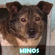 Les adultes de taille moyenne en Roumanie en un clin d'oeil Minos18