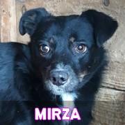 Les adultes de petite taille en Roumanie en un clin d'oeil Mirza12