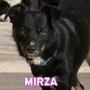 Association Remember Me France : sauver et adopter un chien roumain Mirza16
