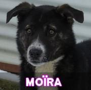 Les adultes de taille moyenne en Roumanie en un clin d'oeil Moira17