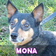 Association Remember Me France : sauver et adopter un chien roumain Mona11