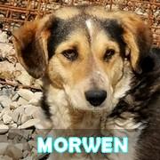 Les adultes de taille moyenne en Roumanie en un clin d'oeil Morwen17