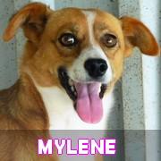 Association Remember Me France : sauver et adopter un chien roumain Mylene20