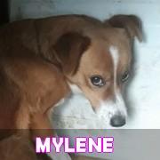 Les loulous handicapés, malades, à la rue ou en urgence vitale en un clin d'oeil Mylene22