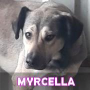 Les adultes de taille moyenne en Roumanie en un clin d'oeil Myrcel26