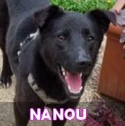 Association Remember Me France : sauver et adopter un chien roumain Nanou12