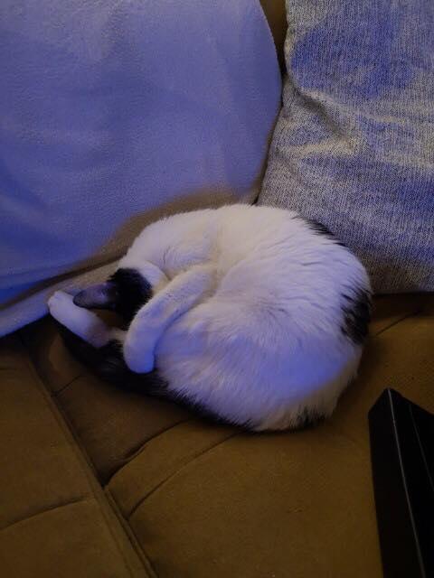 BICKY (ex NASKA) - chaton femelle, née environ novembre 2017 - adoptée par Lorène et Julien (75) Naska310