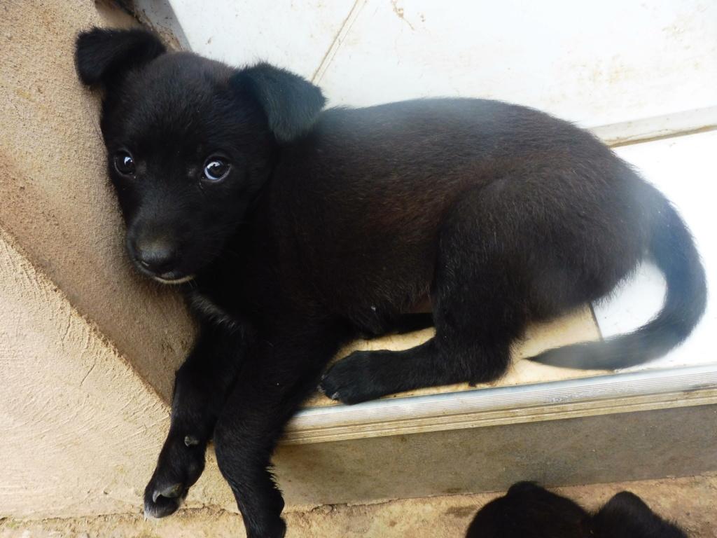 PRIM (ex NINI) - adorable petite femelle née en mai 2018 - REMEMBER ME LAND - Adoptée par Caroline (59) Nini_116