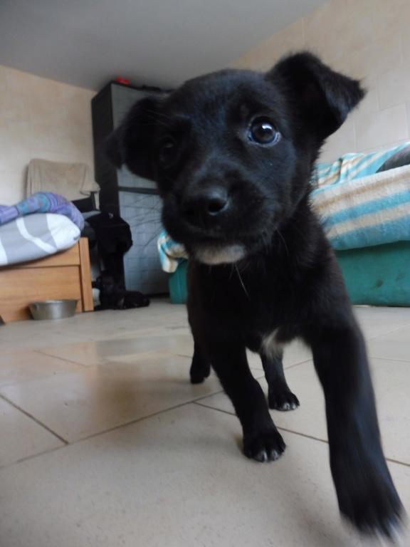 PRIM (ex NINI) - adorable petite femelle née en mai 2018 - REMEMBER ME LAND - Adoptée par Caroline (59) Nini_410