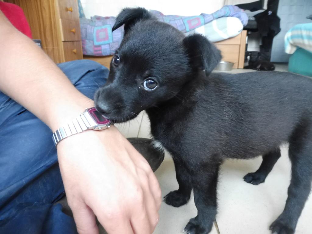 PRIM (ex NINI) - adorable petite femelle née en mai 2018 - REMEMBER ME LAND - Adoptée par Caroline (59) Nini_710