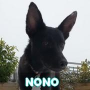 Association Remember Me France : sauver et adopter un chien roumain Nono16