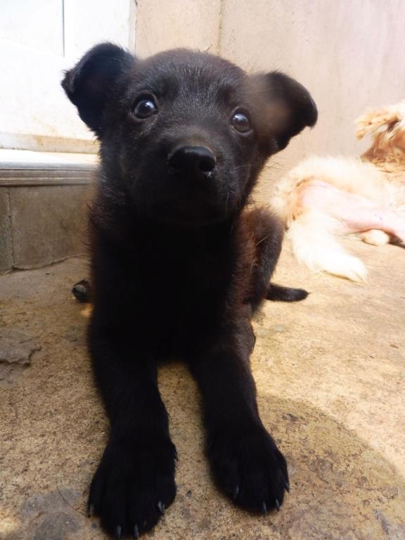 NONO - mâle, taille moyenne, né en mai 2018 (Pascani) - adopté par Camille (57)  Nono_115