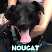Les loulous handicapés, malades, à la rue ou en urgence vitale en un clin d'oeil Nougat20