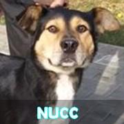 Les adultes de taille moyenne en Roumanie en un clin d'oeil Nucc11