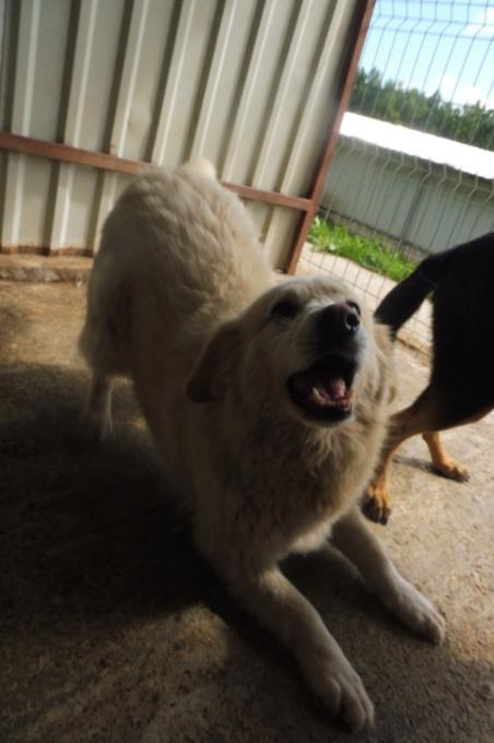 OCARINA - femelle croisée de taille moyenne, née environ en janvier 2011 (PASCANI) - REMEMBER ME LAND - Adoptée par Camille (57) Ocarin17