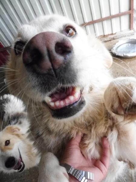 OCARINA - femelle croisée de taille moyenne, née environ en janvier 2011 (PASCANI) - REMEMBER ME LAND - Adoptée par Camille (57) Ocarin21