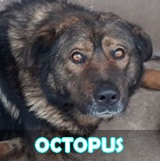 Les séniors en roumanie en un clin d'oeil Octopu16