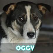 Les adultes de taille moyenne en Roumanie en un clin d'oeil Oggy12