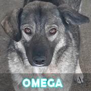 Association Remember Me France : sauver et adopter un chien roumain Omega13