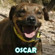 Association Remember Me France : sauver et adopter un chien roumain Oscar12