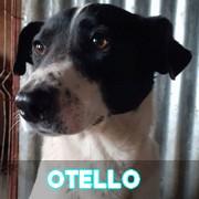 Les adultes de taille moyenne en Roumanie en un clin d'oeil Otello18