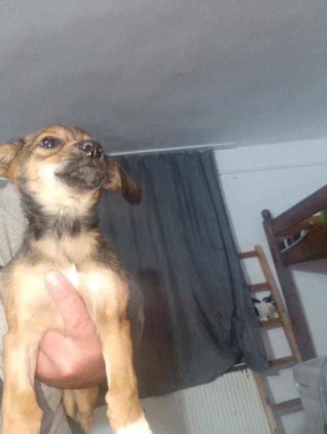 OTILYA - Chiot femelle - croisée, taille petite à l'âge adulte - Née environ mi juin 2019 - ADOPTEE PAR AMELIE (30) Otilya21